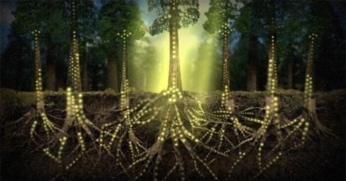 plants-communicate-using-an-internet-of-fungi-720x377-2